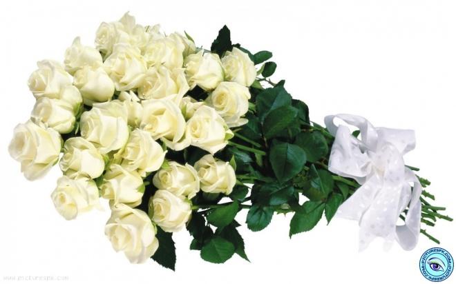 white-rose-bucket-1280x800